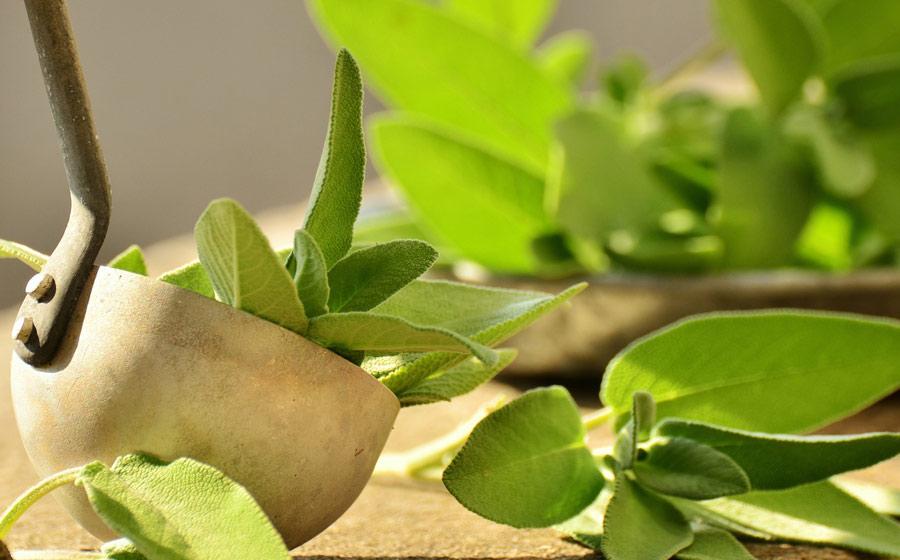 herbs-image3