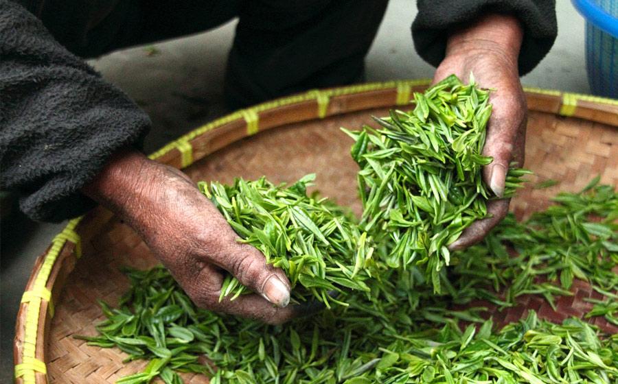 herbs-image4